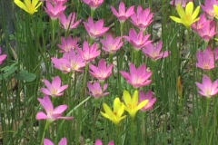 Flowers after heavy rains 2 Stock Footage