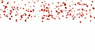 Stock Video Footage of Rose Petals Falling.love,pattern,romantic,rose,valentine,wedding,