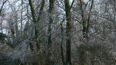 Icy Trees Stock Footage