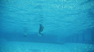 Stock Video Footage of underwater freestyle swim