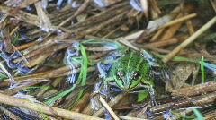 Frog3 Stock Footage