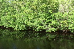 Mangrove Trees Stock Footage