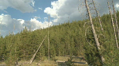 P01178 Yellowstone National Park Forest Succession Stock Footage
