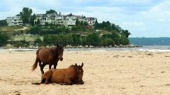 Pair of horses on beach Stock Footage