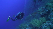 Scuba diver observing and  Hawksbill turtle Stock Footage