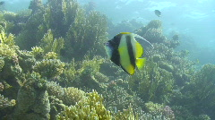 Tropical fish close to coral reef Stock Footage