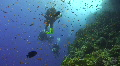 Technical diver exploring coral reef Footage