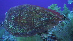 High angle view of a Sea turtle Stock Footage