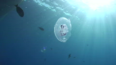 Jellyfish and sunrays - stock footage