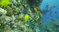 Tropical reef scene HD Footage
