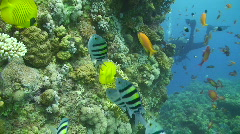 Stock Video Footage of Tropical reef scene