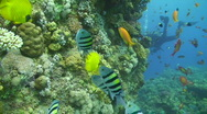 Tropical reef scene Stock Footage