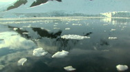 Stock Video Footage of drifting through ice field in antarctica