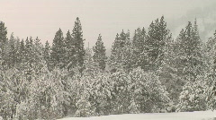 SnowyTrees 1080 Stock Footage