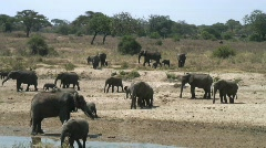 A heard of Elephants in Africa Stock Footage