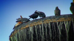 Pigeons on the fountain Stock Footage