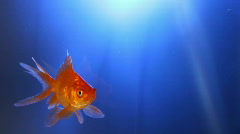 Happy swimming gold fish Stock Footage