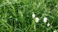 Grass Stock Footage
