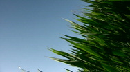 Grass against the blue sky Stock Footage