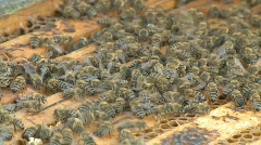 Beekeeping, bees and hives Stock Footage
