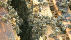 Beekeeping, bees and hives - stock footage