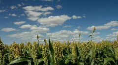 Time Lapse Sorghum Crop Farm Field Landscape Scenic - stock footage