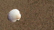 Seashell on beach V2 - HD Stock Footage