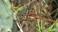 Colorful Grasshopper And Cactus Footage