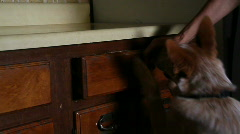 Chase (dog) closing the drawer Stock Footage