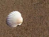 Seashell by the seashore V1 - NTSC Stock Footage