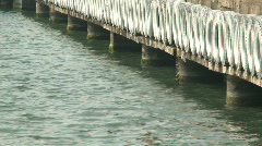Tiers and water Stock Footage