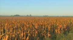 Corn Morning5 Stock Footage