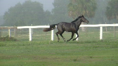 Horse Galloping Across Field - stock footage