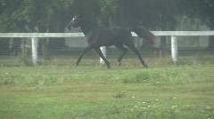 Horse Cantering Across Field Stock Footage