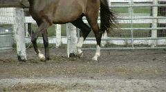 Horse Cantering Close Up Stock Footage