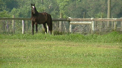 Horse Standing in Field Wide Shot Stock Footage