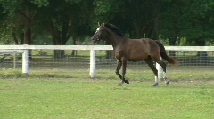 Horse Galloping Across Field Stock Footage