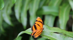 Butterfly in the rain forest Stock Footage