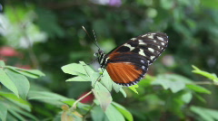 Butterfly rain forest Stock Footage