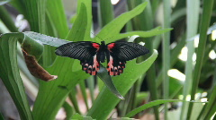 Butterfly in rainforest Stock Footage