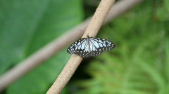 Butterfly in the forest Stock Footage