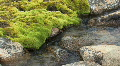 Moss covered rock and stream (w/sound) HD Footage