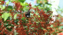 Butterfly ,eating Stock Footage