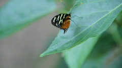 Butterfly resting on leaf Stock Footage