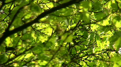 Lehdet keväällä tuuli Arkistovideo