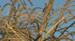 cornstalks - stock footage