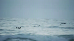 Pelicans gliding over waves Stock Footage