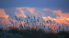 Sea Oats at Sunset Stock Footage