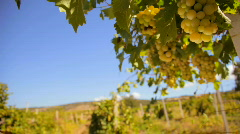 White wine grape Stock Footage