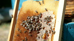 bees and honey - stock footage